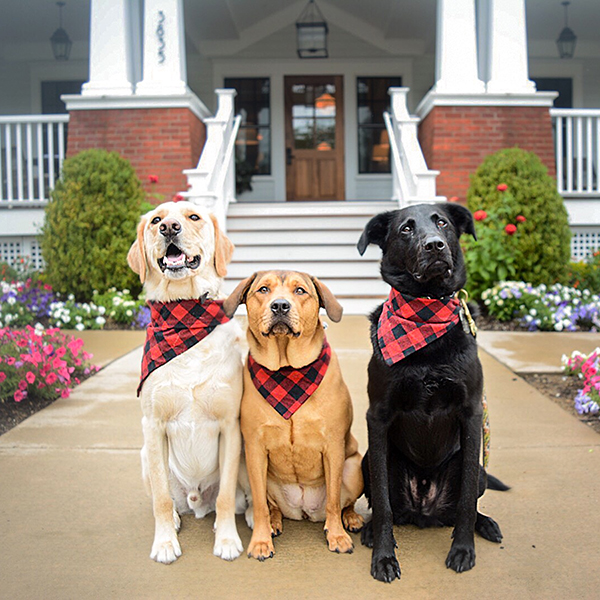 Dogs outside the Kimpton Taconic Hotel in Manchester, VT